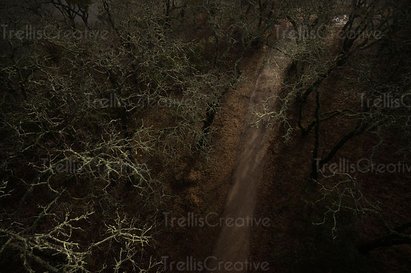 Aerial view of craggy oak trees along a mysterious forest path