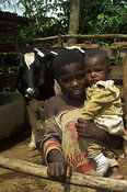 Young boy with a baby in his arms in pen with dairy cow to the rear, Busia, Western Kenya Africa