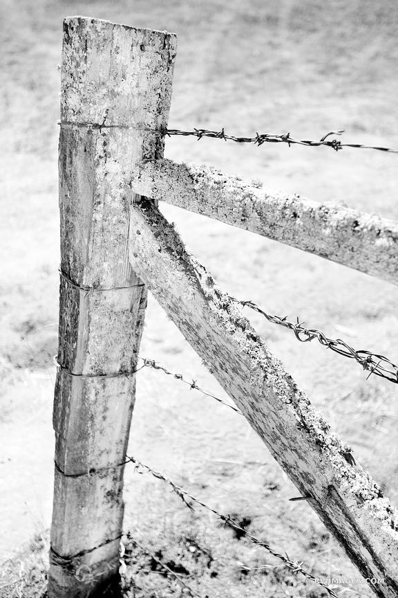 OLD WOODEN WIRE FENCE BODEGA SONOMA COAST CALIFORNIA BLACK AND WHITE
