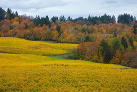 Elk_Cove_Winery_Oregon-9901~2