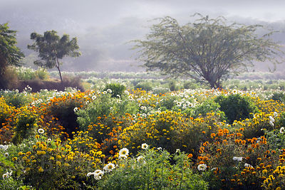 Gorgeous flower farms near Maseena village, Rajasthan, India, home to some of the happiest people I've ever met