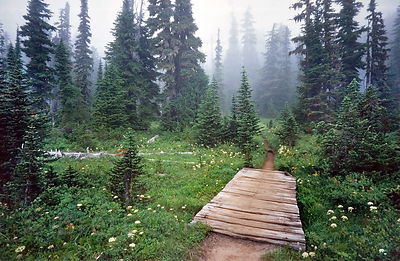Idyllic path through old growth forest at reflection lake, Mount Rainier, Washington