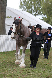 HOY_220314_Clydesdales_2359