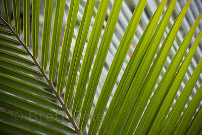 Abstraction of palm fronds, Skutch Corridor, Costa Rica