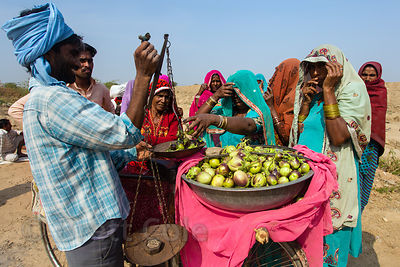 Ladies in saris buy eggplants from a mobile (bicycle) vegetable seller while taking a lunchbreak from a goverment subsidized construction job, Kaklana village, Rajasthan, India