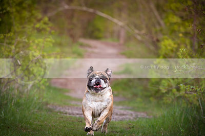 humorous goofy dog running on path with vegetation