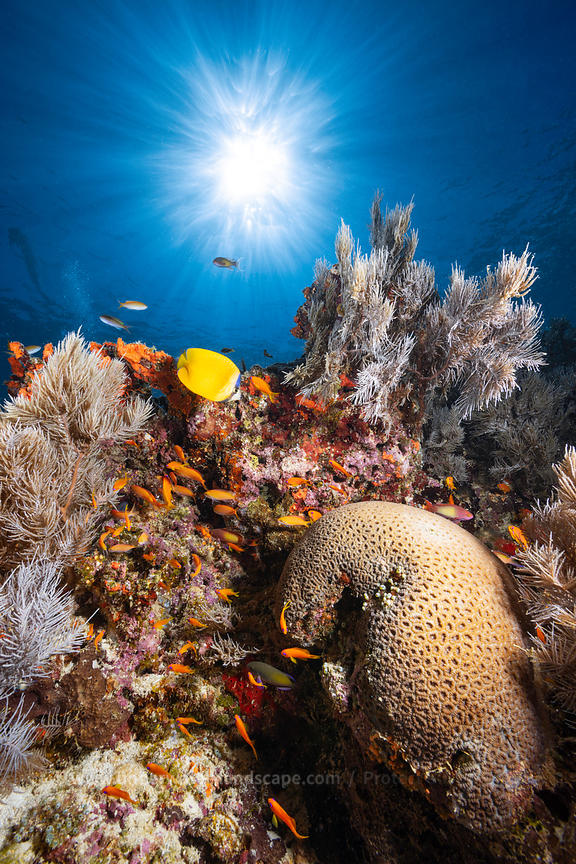 Reef life of Mayotte Island