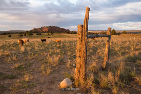 Grazing land in Escalante, a city in Garfield County, Utah, United States.
