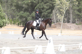 SI_Festival_of_Dressage_310115_Level_1_Champ_0686