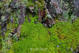 Lush Moss Growing in Seattle Arboretum