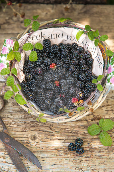 seek  and you shall find, blackberries in paper lined basket against rustic wood and vintage scissors,
