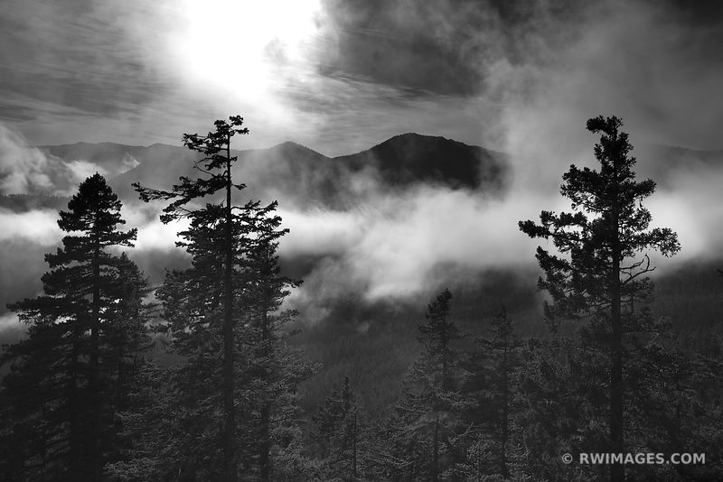 HURRICANE RIDGE CLOUDS FOREST OLYMPIC NATIONAL PARK BLACK AND WHITE