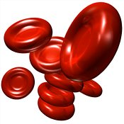 Red Blood Cells (RBCs or erythrocytes)