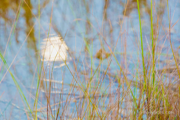 FULL MOON REFLECTION IN MARSH WATER PA-HAY-OKEE EVERGLADES FLORIDA
