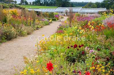 Double herbaceous borders planted with predominantly hot colours leading toward restored Victorian glasshouses. Plants include Coreopsis 'Astolat', crocosmias, dahlias, Persicaria affinis 'Darjeeling Red' and Echinacea purpurea Bressingham hybrids. Helmsley Walled Garden, Helmsley, York, North Yorkshire, UK