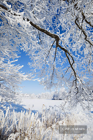Winter landscape with hoar frost - Europe, Germany, Bavaria, Upper Bavaria, Penzberg - digital