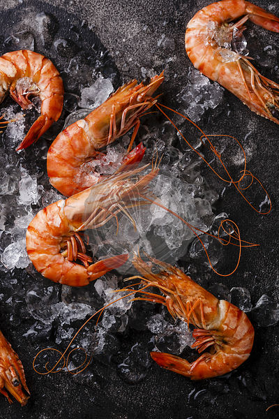 Boiled pink Tiger Prawn Shrimp on ice on black background close-up