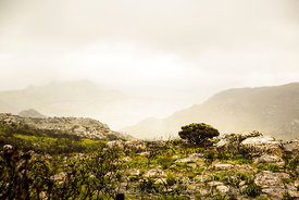 Silvermine Fire 2015 - six months later, regeneration and regrowth