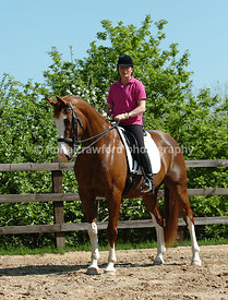Chestnut warmblood gelding
