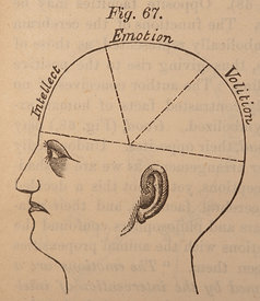 Phrenology of the head
