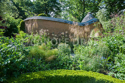 View towards Pond Garden surrounded by cob wall, topped with tiles and thatch, across box hedging, past Stipa gigantea, fennel and Cephalaria gigantea. Dusky pink Nectaroscordum siculum flower against the peachy cob wall. Caervallack Farm, St Martin, Helston, Cornwall, UK