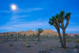 Joshua Tree Twilight