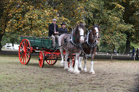 HOY_230314_clydesdales_3577