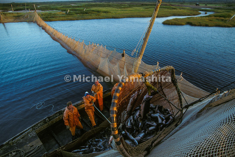 Salmon may run but they can't hide from Iturup fishermen, who unload a weir strung across the Reydovaya River. For all the wealth produced by the Kurils - a third of Russia's fish catch comes from the greater island region - little returns to upgrade the area's primitive infrastructure.
