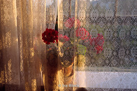 Flowers on a windowsill with a lacy curtain
