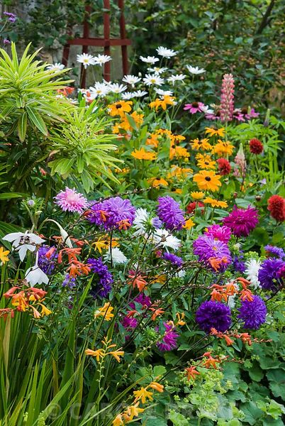 Decorative border punctuated by red wooden obelisks features brightly coloured dahlias, Rudbeckia 'Marmalade', Aster 'Ostrich Plume Mixed', shasta daisies, crocosmias and an edging of Alchemilla mollis. The Shute, nr Ventnor, Isle of Wight, UK
