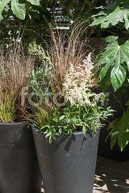 Fotoflor toutes les photos et images de plantes fleurs jardins sur le th me gramin es - Graminees en pot ...