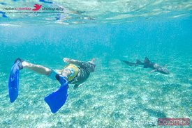 Tourist snorkeling with a shark, Belize