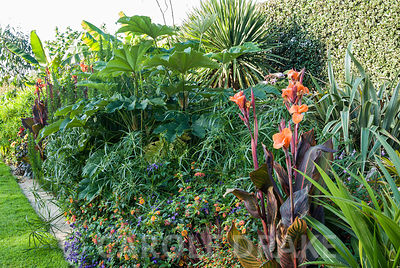 Tropical border including tetrapanax, cannas, lantana, Cyperus alternifolius. Bourton House, Bourton-on-the-Hill, Moreton-in-Marsh, Glos, UK