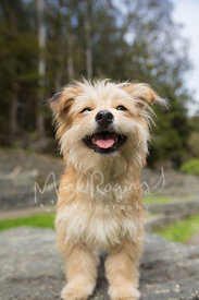Blinking and smiling terrier dog with happy expression