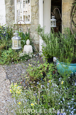 Insect friendly plants around Brigit Strawbridge's front door in the historic Pump Yard include forget-me-nots, Limanthes douglasii, the poached egg plant, and Cerinthe major 'Purpurascens'.