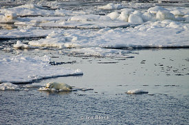 A polar bear cub rests on a perfectly sized ice floe in the arctic waters near Edgoya, Norway.