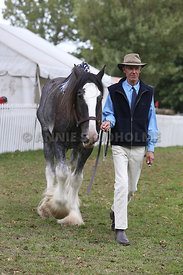 HOY_220314_Clydesdales_2361
