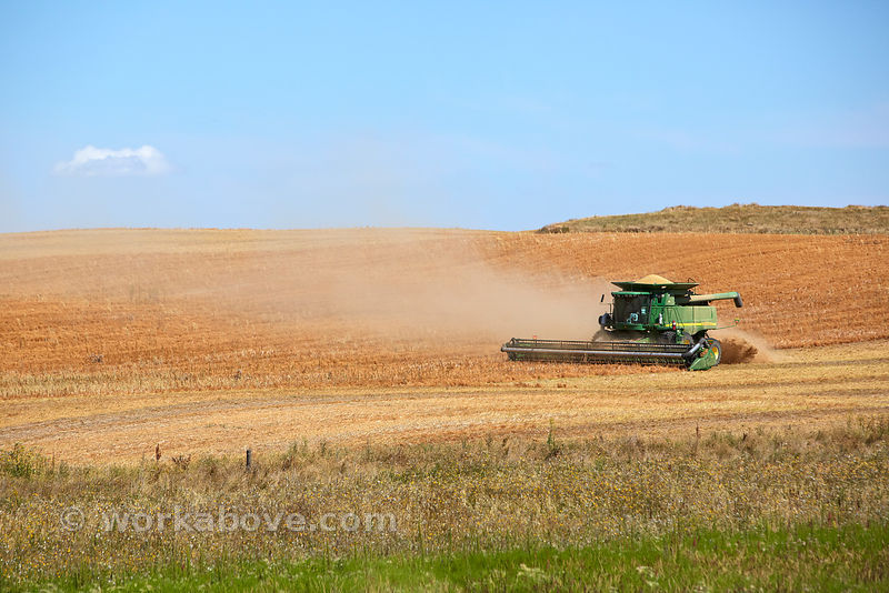 Lentil Harvesting photos