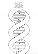 DNA Colouring In