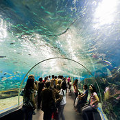 Underwater tunnel with visitors, Manila Ocean Park, Luneta, Manila, Philippines