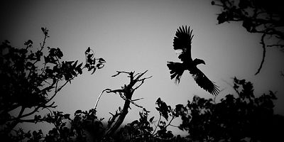 X-Bird-Kalao_in_the_sky_Laurent_Baheux