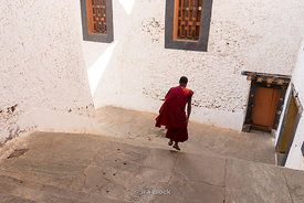 Young monk stepping down the stairs at Punakha Dzong festival in Bhutan.