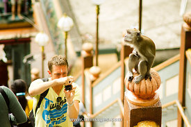 tourist takes pictures of monkey at Batu Cave of Malaysia.