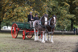 HOY_230314_clydesdales_3578