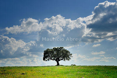 Cork tree in the vast plains of Alentejo, Portugal