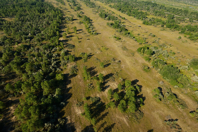 Aerial view of forest within the Danube delta, Danube delta rewilding area, Romania, June 2012