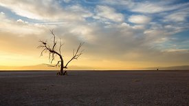 Medium Shot: Lone Dead Tree Sticking From A Dried Up Lakebed (Day to Night)