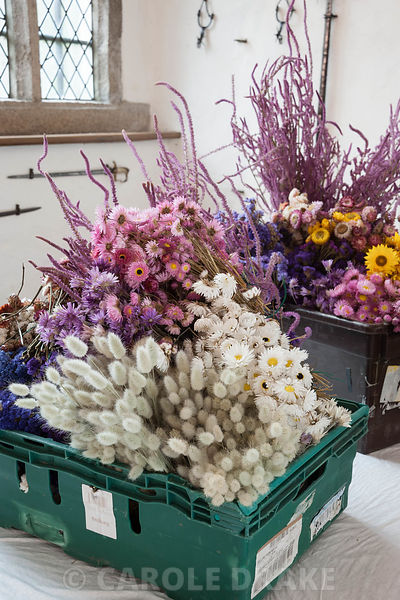 Boxes of dried flowers prepared and counted, ready to be attached to the pittosporum base of the Christmas garland in the Great Hall. Cotehele, St Dominick, nr Saltash, Cornwall, UK