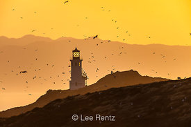 Anacapa Island Lighthouse at Sunrise