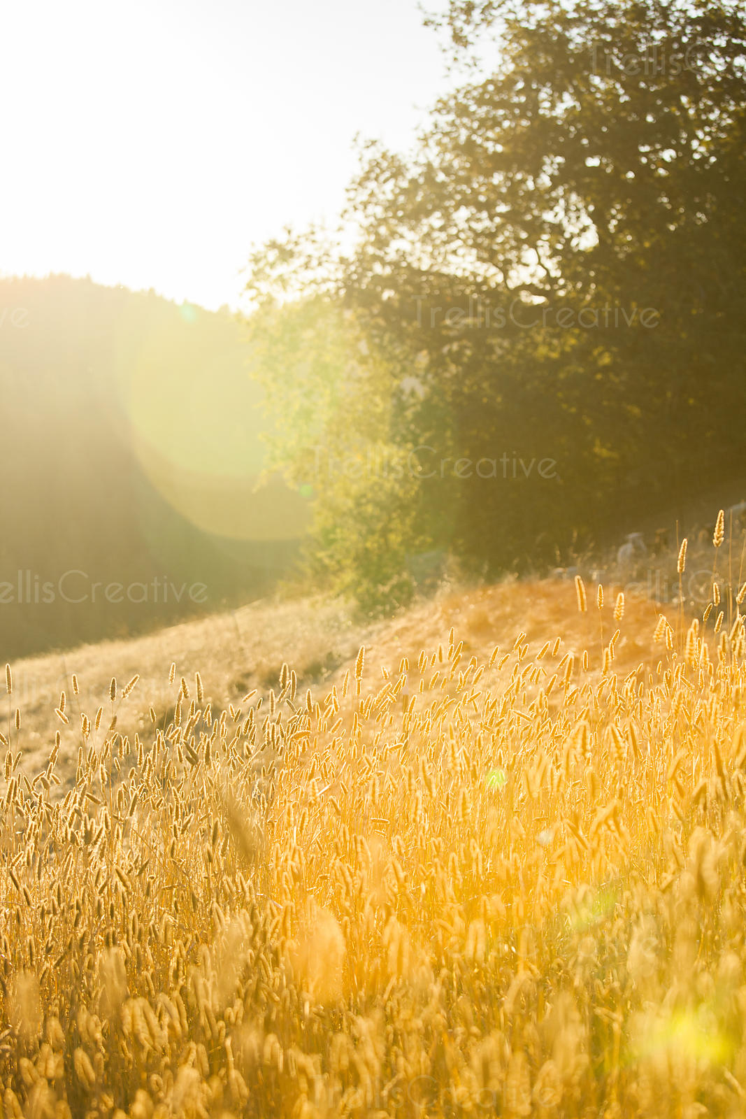 Golden grass growing on the mountain slope